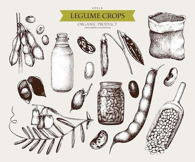Vintage set of legume plants and farm products in vintage style Premium Vector