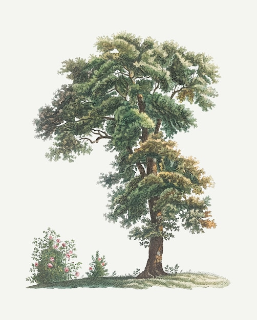 Vintage tree drawing Free Vector