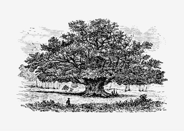 Vintage tree illustration Free Vector