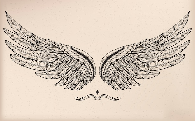 Wings Drawing Vectors Photos And Psd Files Free Download