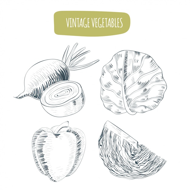 Vintage vegetables collections Premium Vector