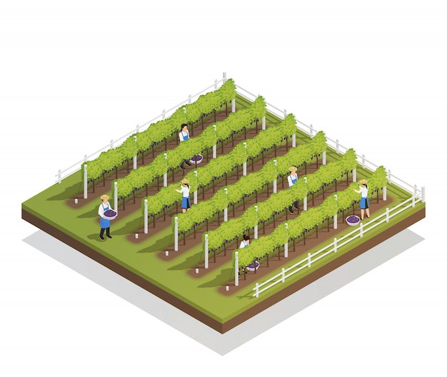 Viticulture isometric composition Free Vector