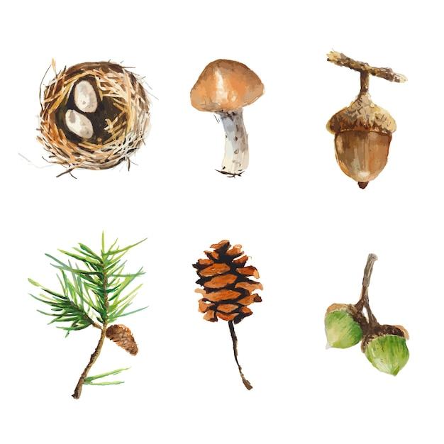 Осенние элементы природы в акварельном стиле. листья, сосновые шишки, гнездо птицы, окрашенные в w Premium векторы