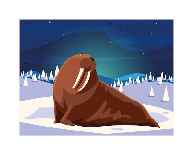 Walrus at the north pole Premium Vector
