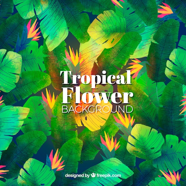 Water color tropical flower background