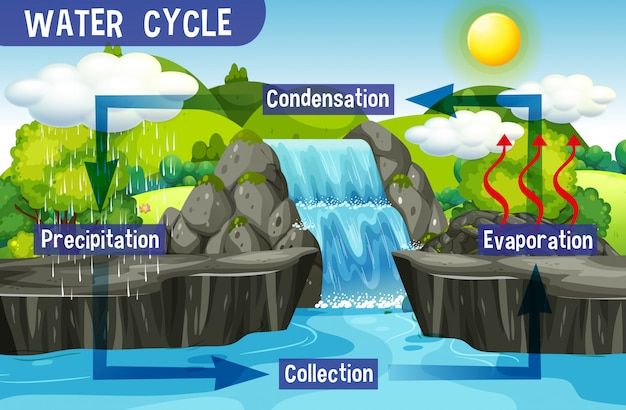 Water cycle process on earth - scientific Free Vector