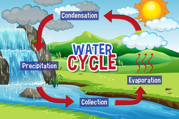 Water cycle process on earth Free Vector