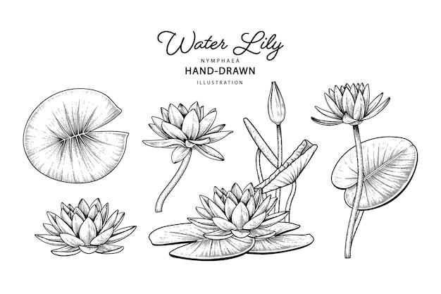 수련 꽃 요소 도면. 프리미엄 벡터