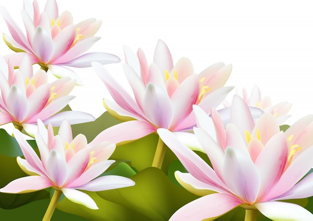 Water Lily Flowers Realistic Background Premium Vector