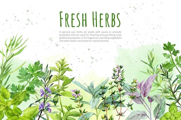 Watercolkor фон с кулинарными травами и растениями Premium векторы