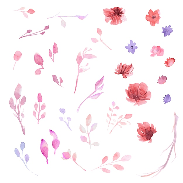 Watercollor flower collection Free Vector