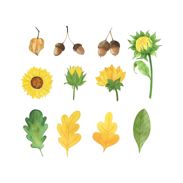 水彩秋葉、キノコ、白い背景で隔離の花入り。 Premiumベクター