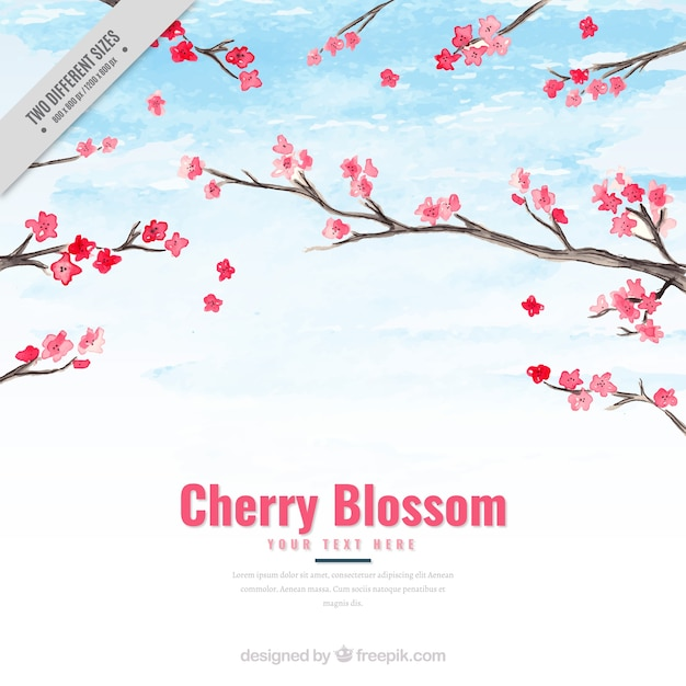 Watercolor background of cherry blossoms Free Vector