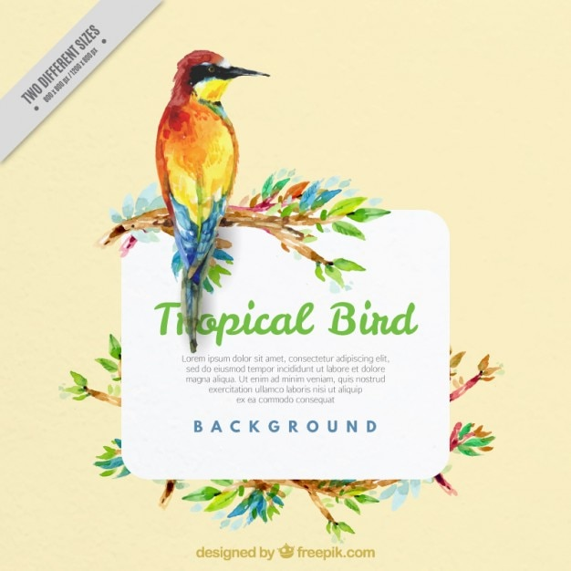 Watercolor background of exotic bird