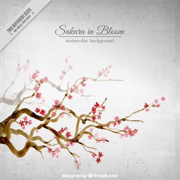 Watercolor beautiful cherry trees background  Premium Vector