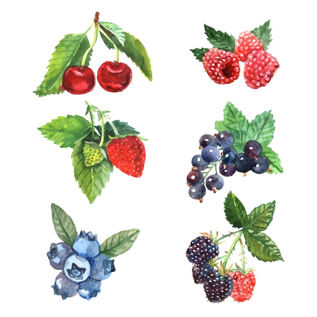 Watercolor berry set with cherry raspberry strawberry Free Vector