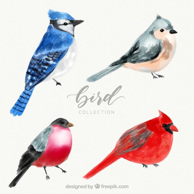 Watercolor bird collection Free Vector