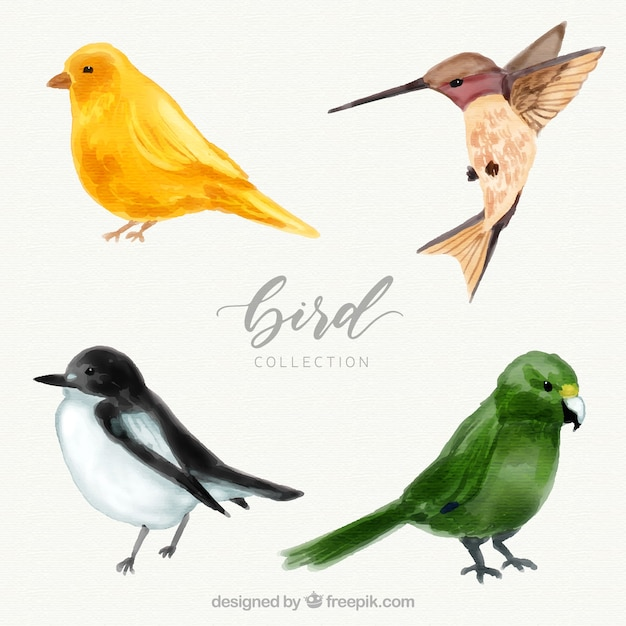 Watercolor bird collection Free Vector