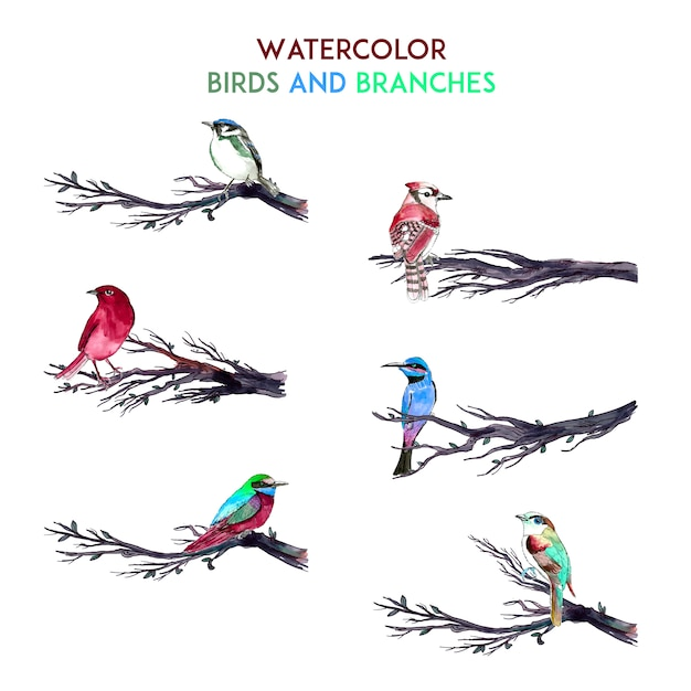 Watercolor birds and branches Free Vector