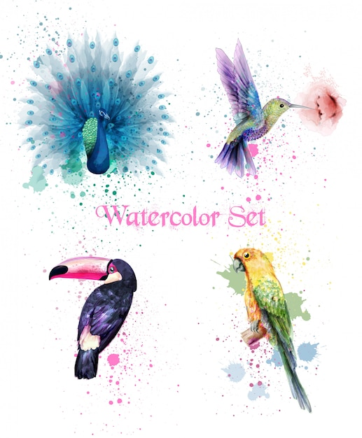 Watercolor birds set with peacock, parrot and humming bird Premium Vector