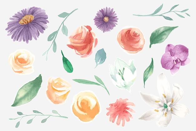 Insieme dei fiori che sbocciano dell'acquerello Vettore gratuito