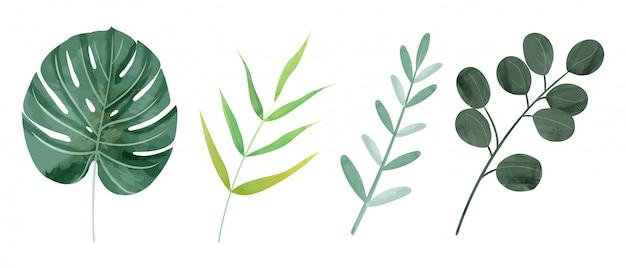 Watercolor botanic wild leaves Premium Vector
