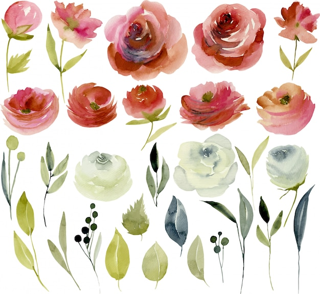 Watercolor burgundy and white roses collection Premium Vector