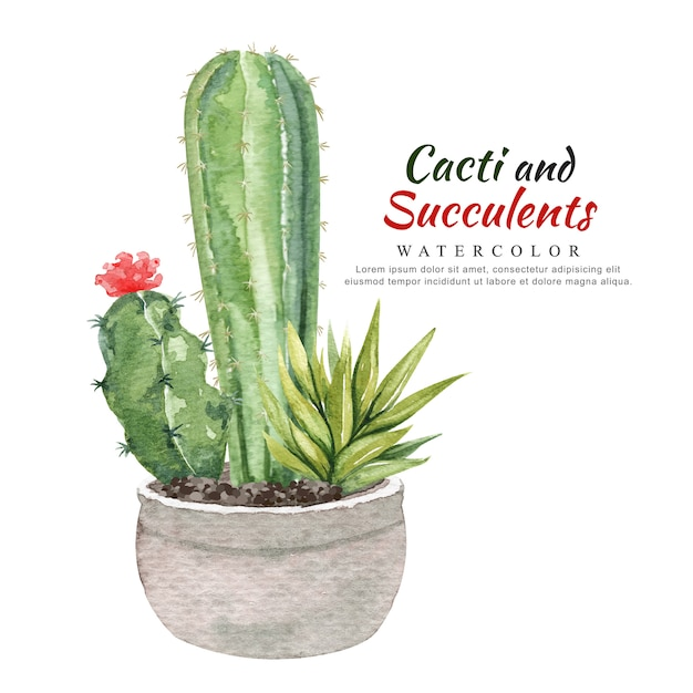 Watercolor cacti and succulents in flowerpot. Premium Vector