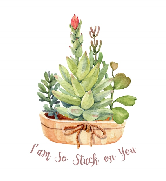 Watercolor cacti and succulents set with pot. Premium Vector