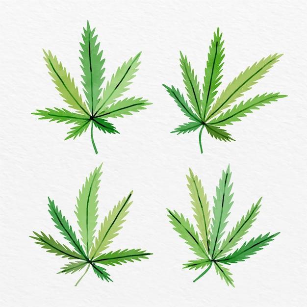 수채화 대마초 잎 컬렉션 프리미엄 벡터