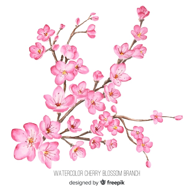 Watercolor cherry blossom branch Free Vector