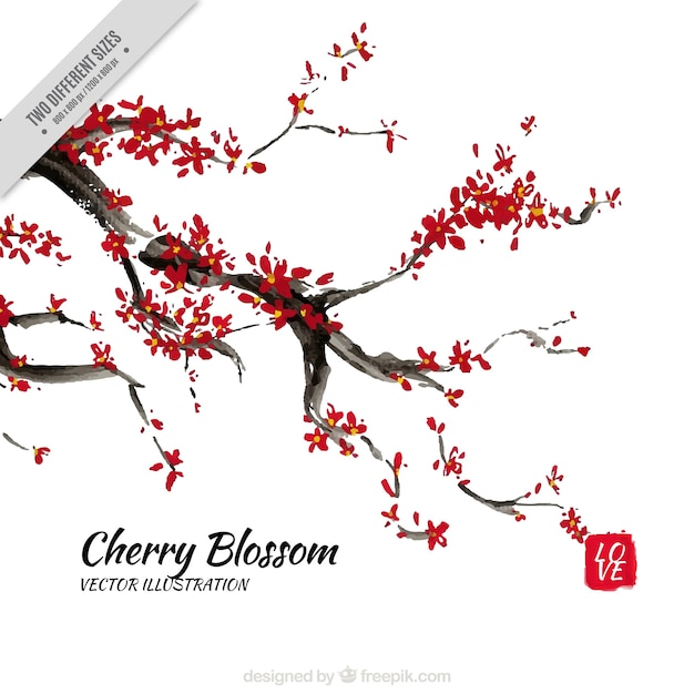 Watercolor cherry blossoms branch background Vector   Free Download