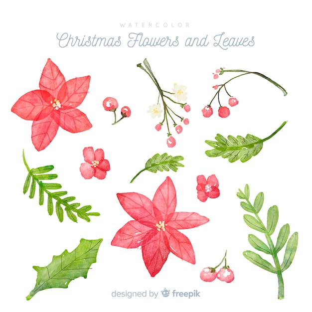 Watercolor christmas flowers and leaves Free Vector