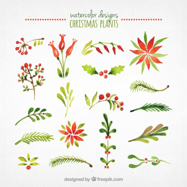 Watercolor Christmas Plants Collection Free Vector