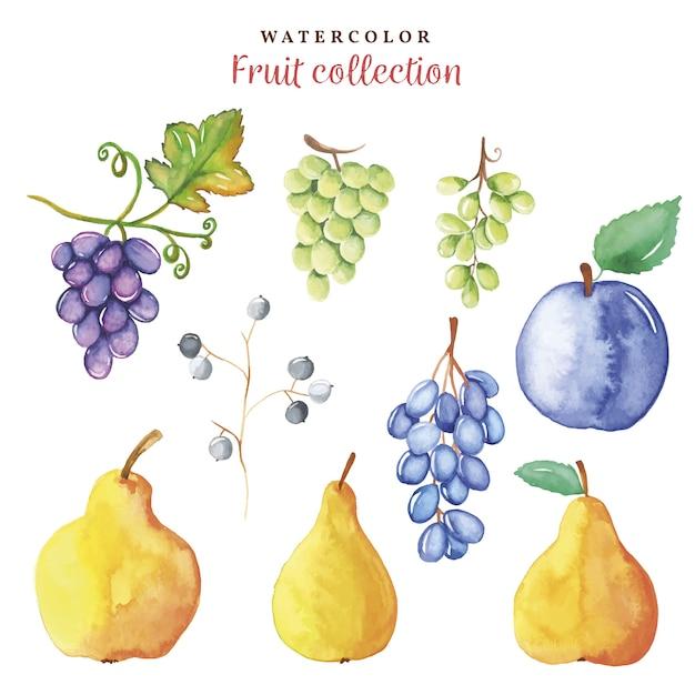 Акварельная коллекция ручной рисования осенних фруктов Premium векторы