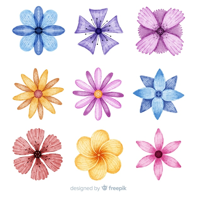 Watercolor colorful flowers and leaves collection Free Vector