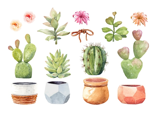 Watercolor element cactus cacti and succulent with pot Premium Vector