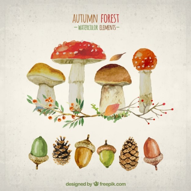Watercolor elements of autumn forest Free Vector