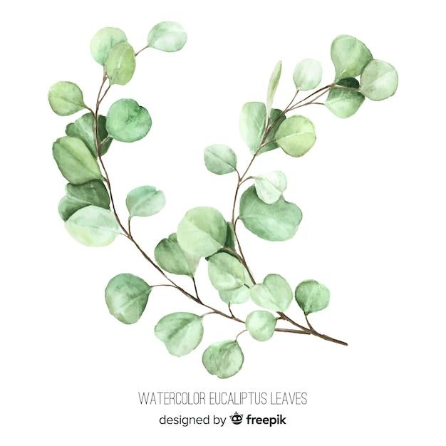 Watercolor eucalyptus branch Free Vector
