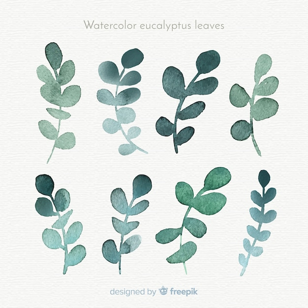 Watercolor eucalyptus leaves collection Free Vector