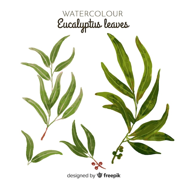 Watercolor eucalyptus leaves set Free Vector