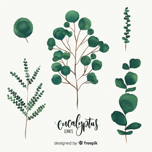Watercolor eucalyptus leaves Free Vector