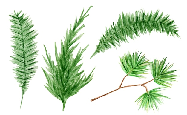 水彩常緑針葉樹の枝セット。孤立したイラスト Premiumベクター