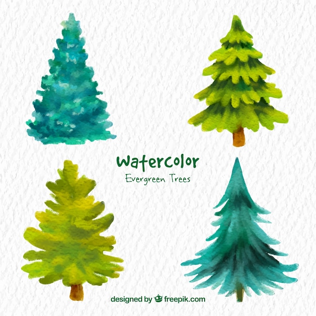 Watercolor evergreen trees vector free download for Arbol de hoja perenne para jardin