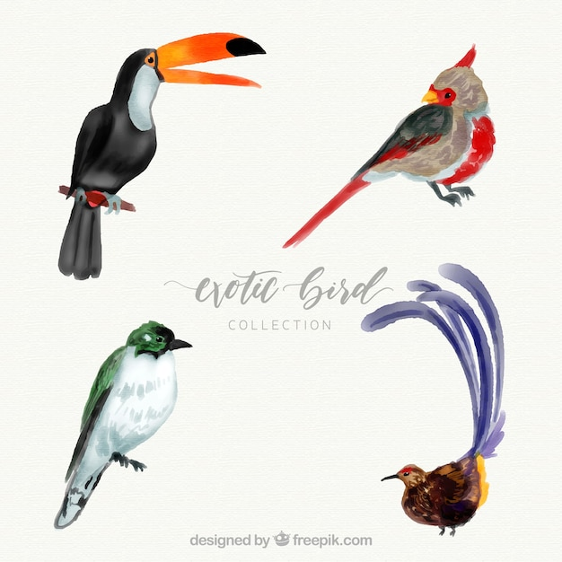 Watercolor exotic bird collection