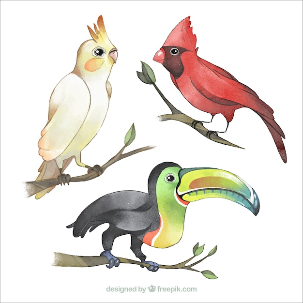 Watercolor exotic birds collection