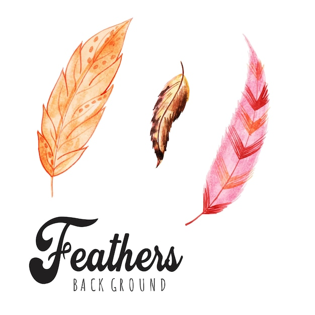Watercolor feathers backgrounds Premium Vector