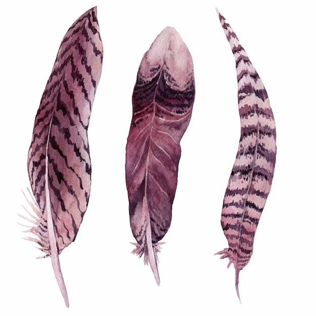 水彩の羽。図。 Premiumベクター