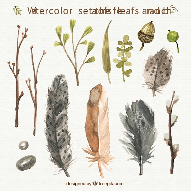 Watercolor feathers, leafs and branches Free Vector
