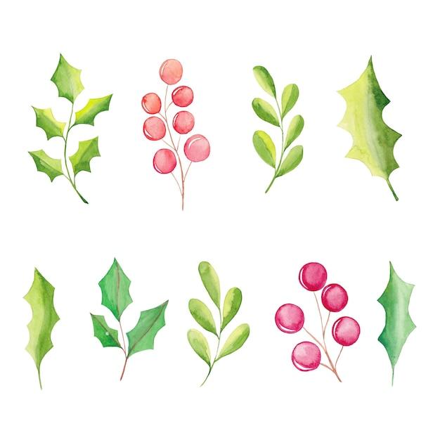水彩花の要素、ポインセチアの花、ベリー、葉、モミの木の枝 Premiumベクター